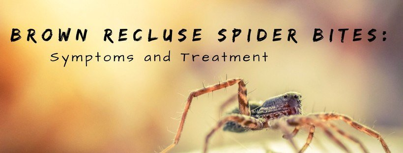 brown recluse spider bite treatment in birmingham al
