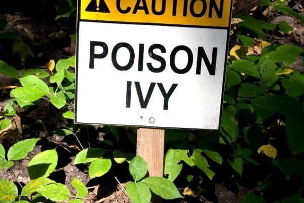 sign warning of poison ivy in an area